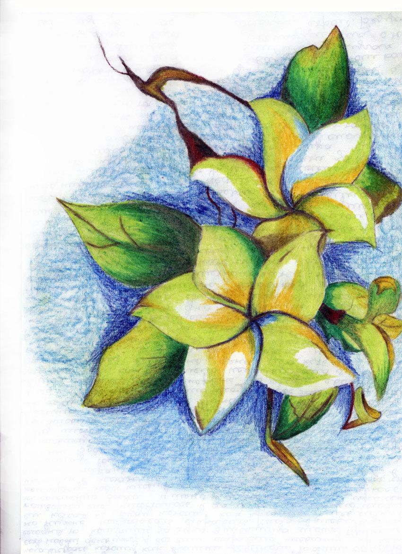 Цветы картинки рисованные цветными карандашами