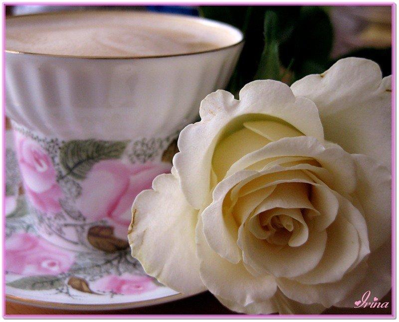 Открытки с добрым утром любимая розы