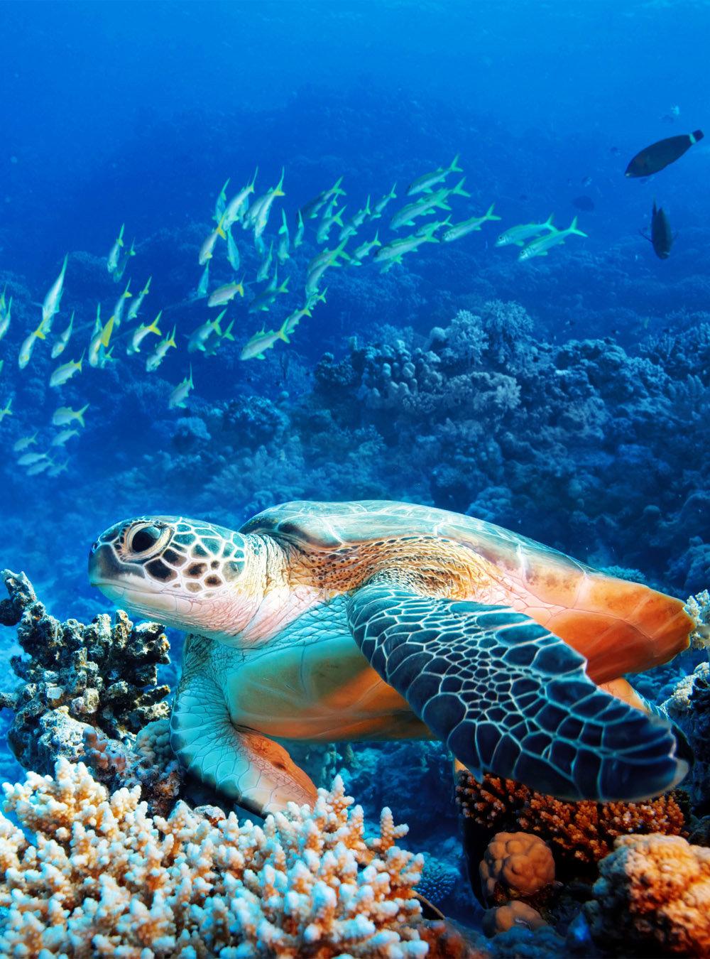 узкой фотообои морские обитатели менее вопрос