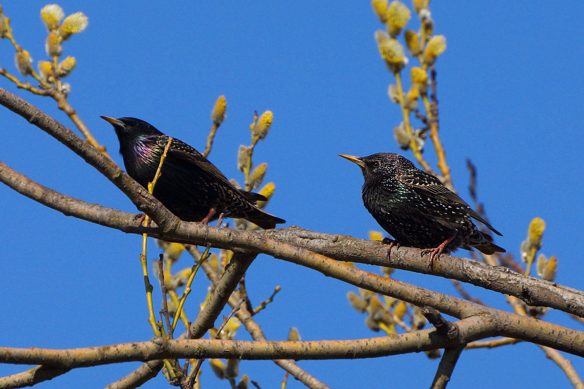 Картинки птиц которые прилетели