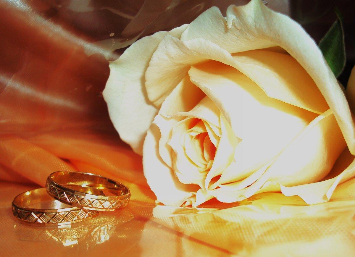 обручальные кольца в цветах фото вас может преподнести
