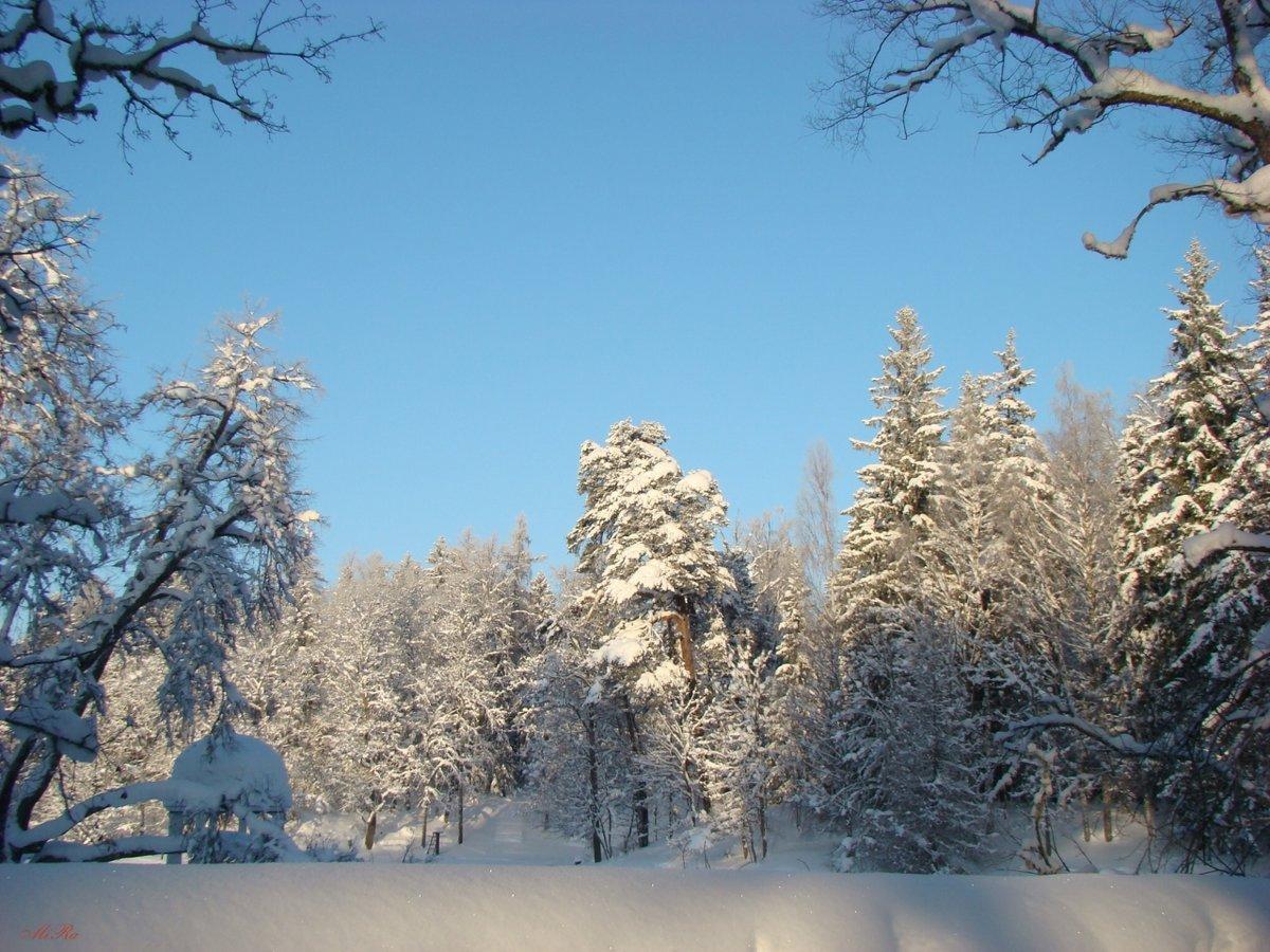 продаже зимний лес стихи красивые как железа крепится