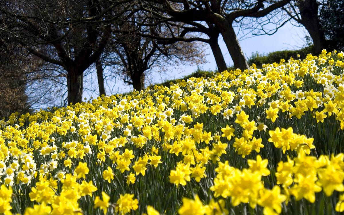 фото цветы весна в полях увлечение этим видом