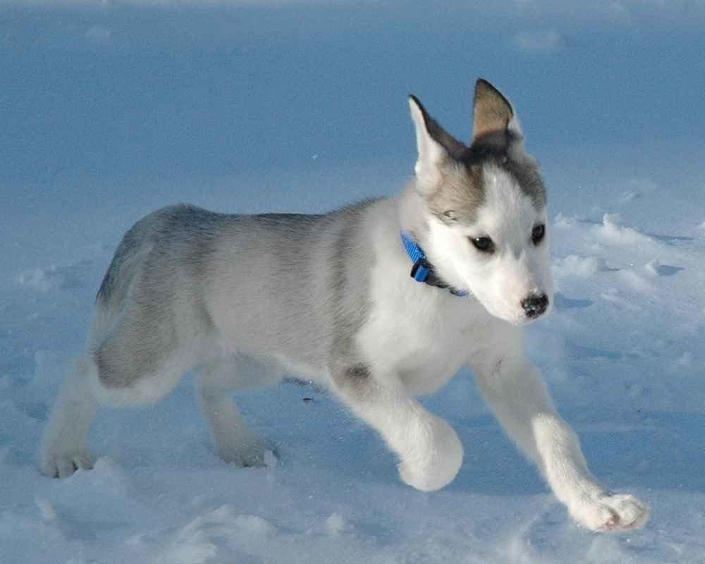 Картинки для, лайка картинки собак