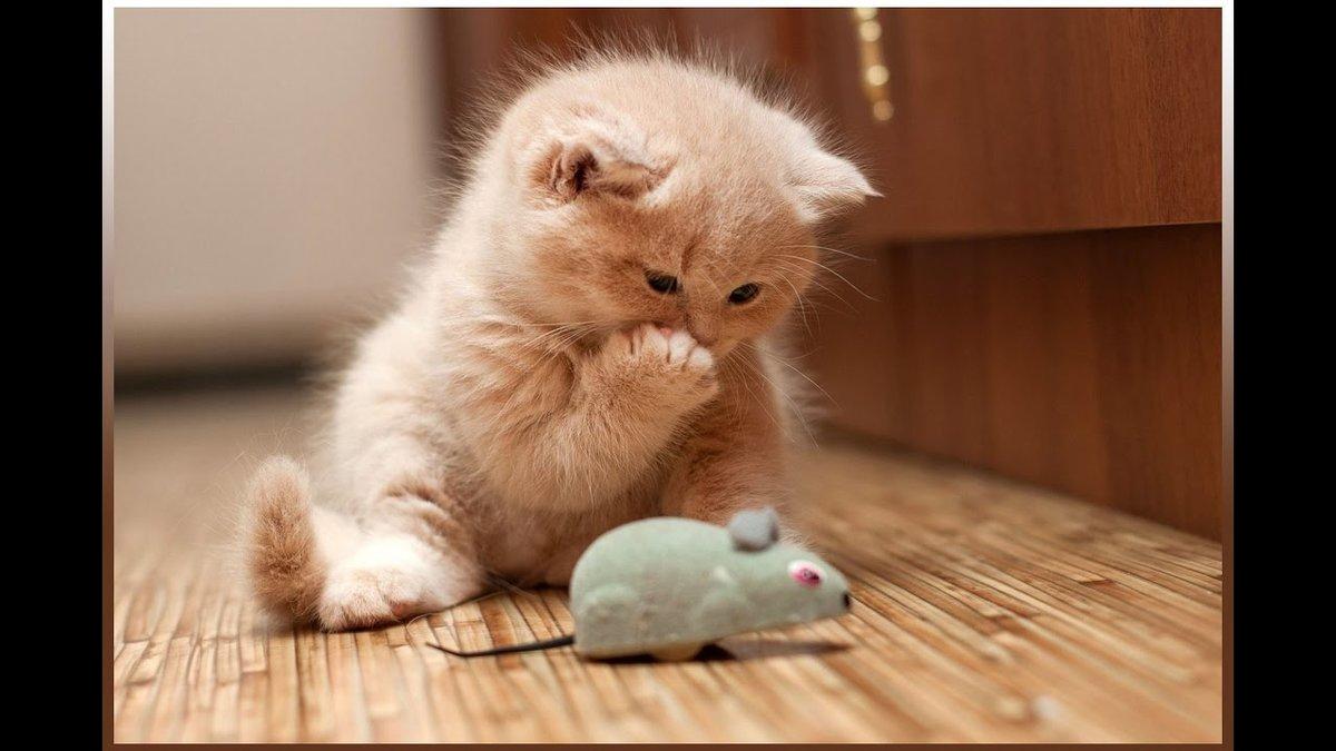 Видео смешные коты с картинками