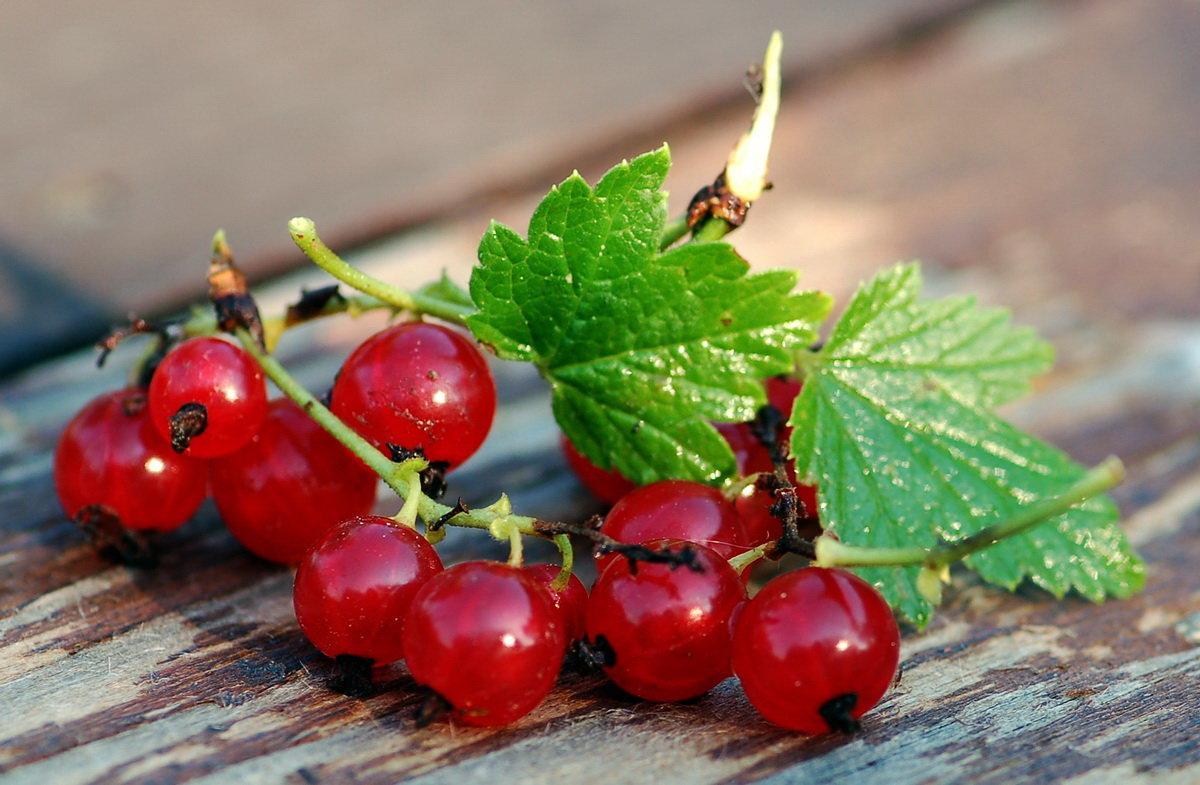 Красивые фото красной смородины
