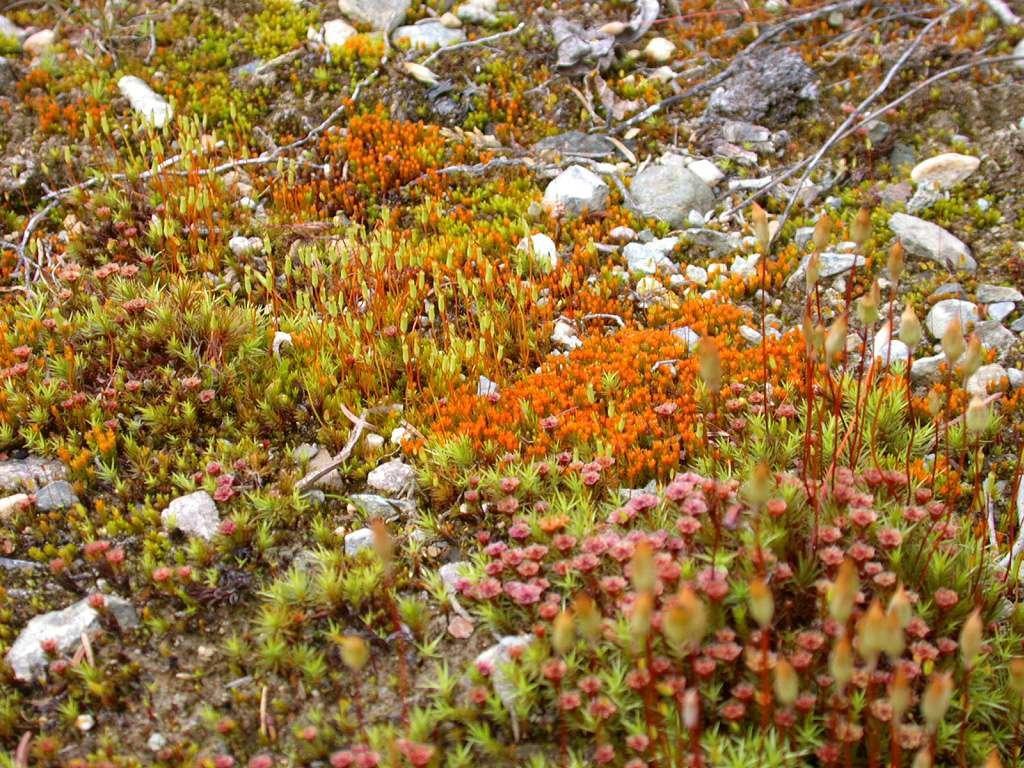 хотелось оранжевый мох фото в тундре хватает