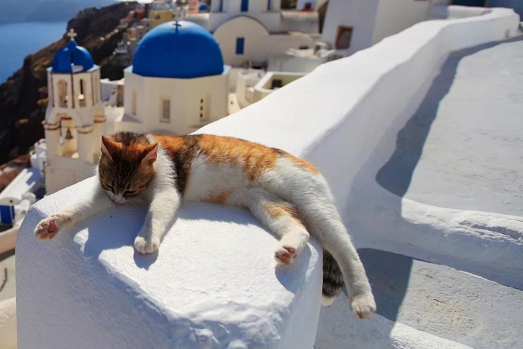 Сделать, греция в смешных картинках