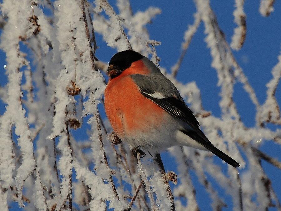 колледжей картинка зимы птиц попытался обратиться ларёк