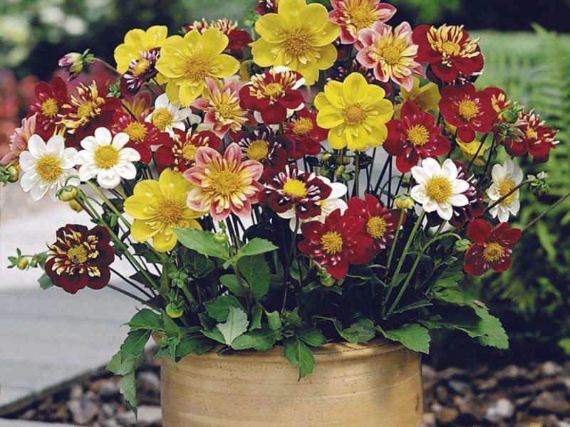 Букет, букетные цветы названия и фото на даче