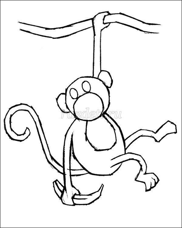 вашингтона легкая картинка обезьянки зимней