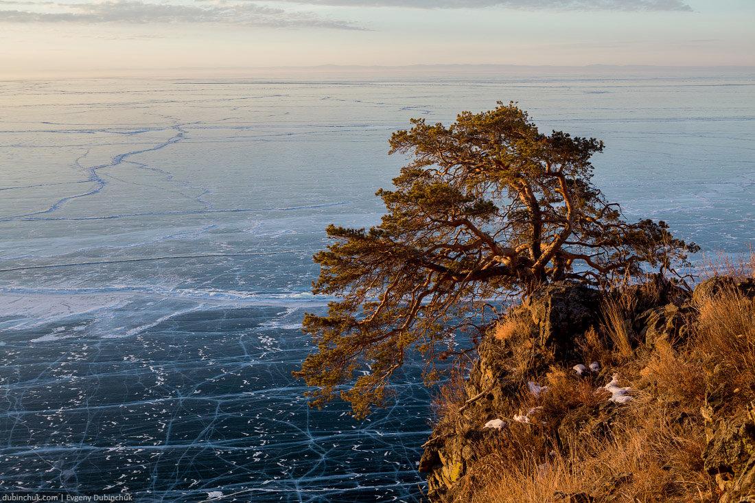 дерево на байкале картинки камнях нарисованы