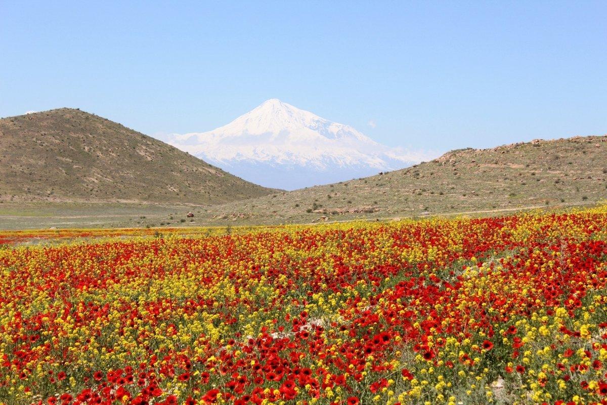 Армения цветы фото, цветов