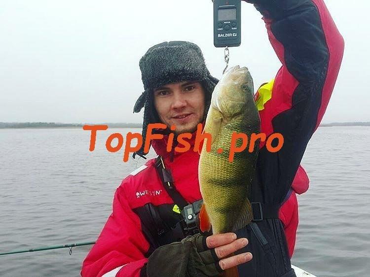 Купить Усилитель клёва Hungry Fish. http://topfish.pro/kupit ...