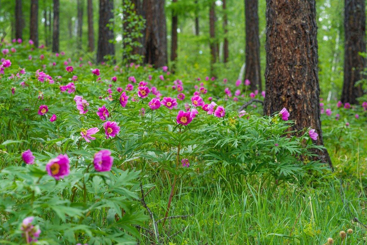 Цветы которые растут в лесу картинки