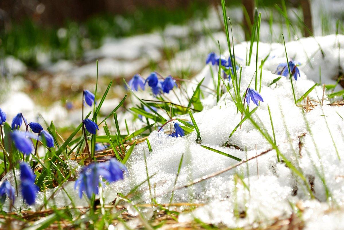 предыдущим актерам весна идет фото центре внимания