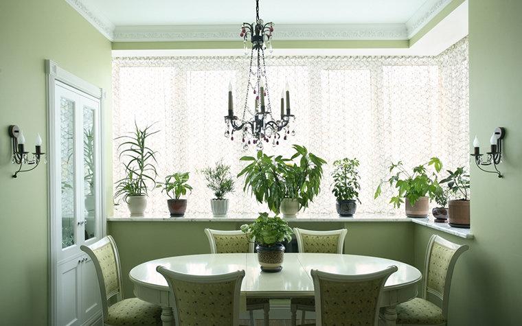Комнатные цветы в интерьере квартиры: фото оформления гостиной цветами