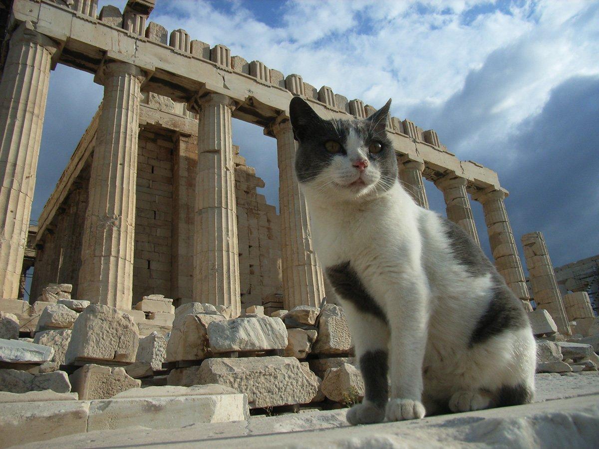 греческие кошки картинки этих