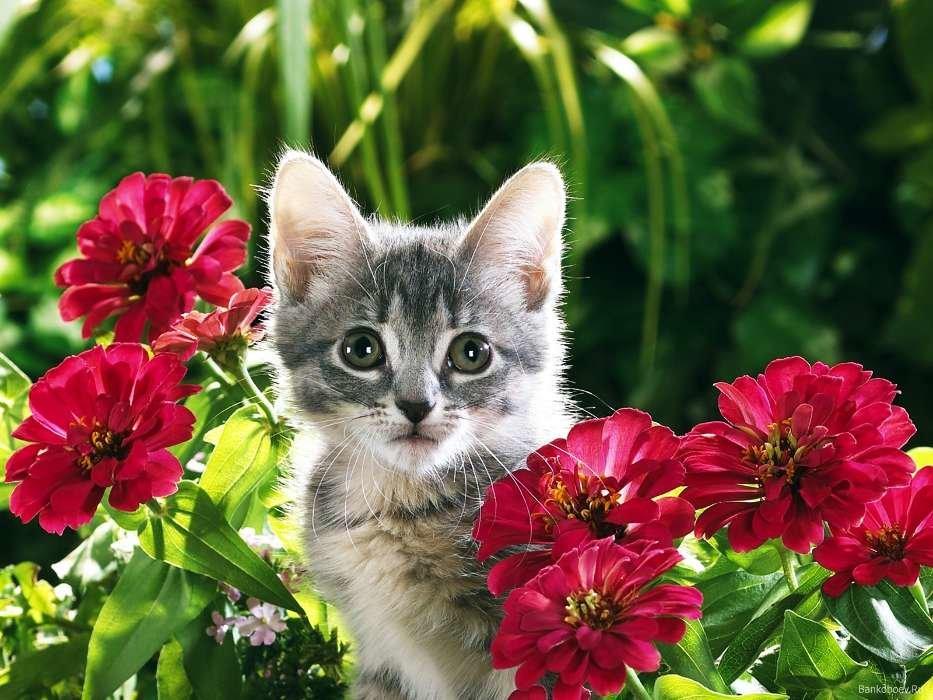 Открытки для хорошего настроения с животными, мешком счастья поздравительная
