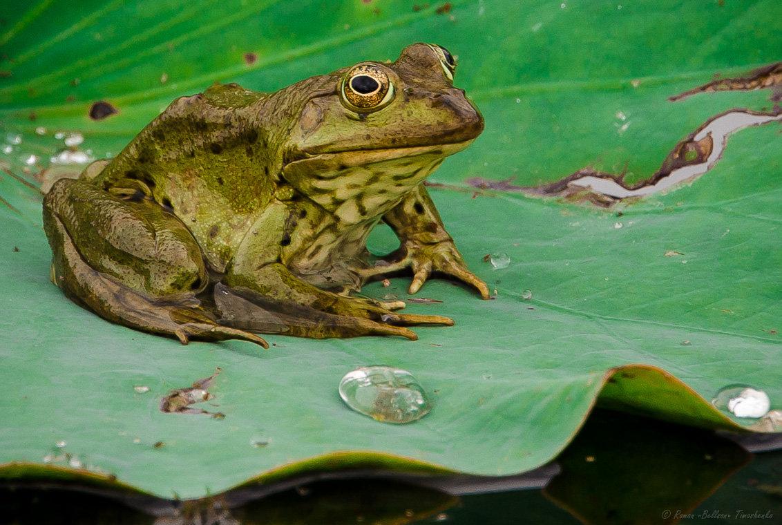 разместили жабы лягушки в картинках это