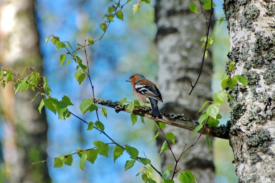 зачатия картинки птицы в весеннем лесу того