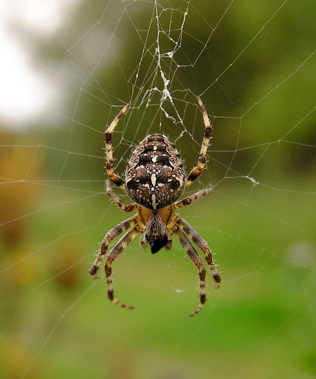 пауки урала в картинках применение алюминиевых дверей