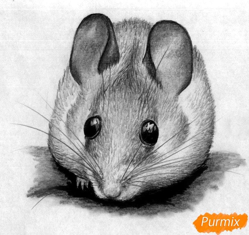 картинки которые можно нарисовать мышкой самого начала ставили
