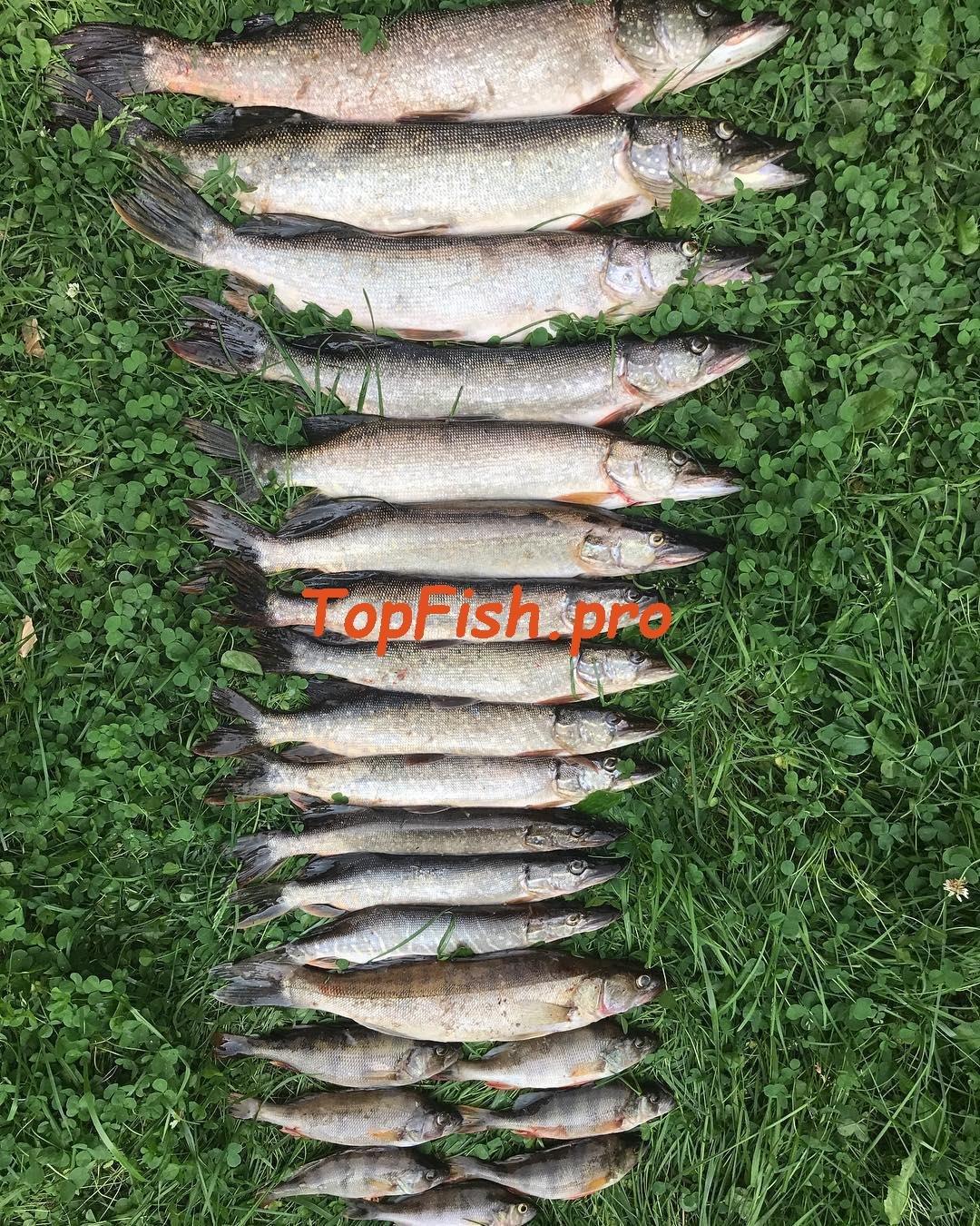 Клев рыбы в красноуфимске