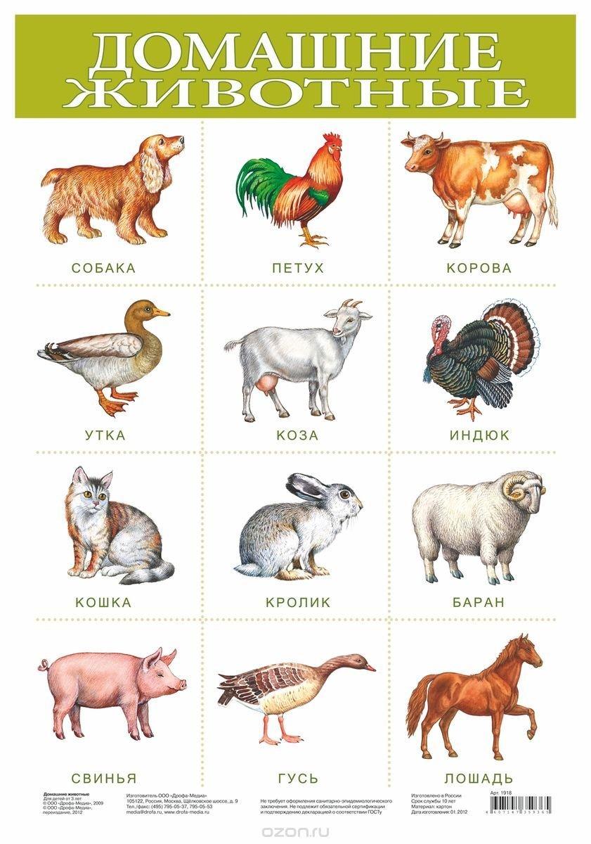 Поздравлениями декрет, картинки с изображением животных для детей