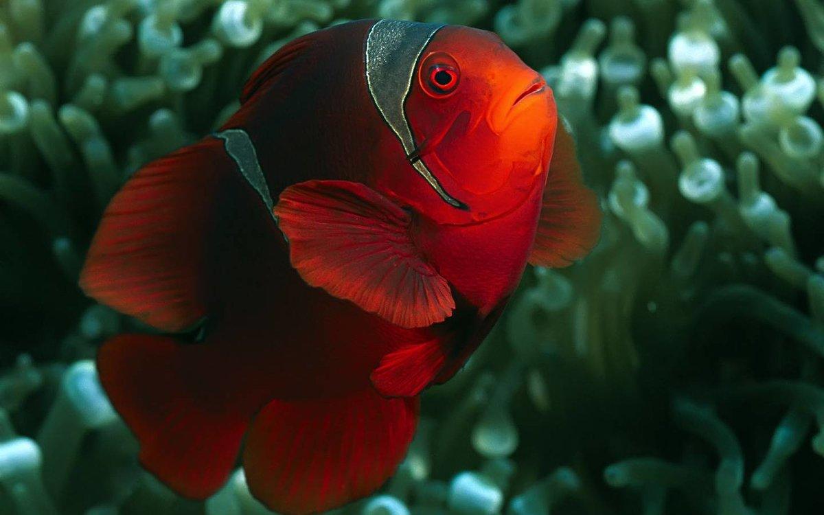 фотопечати яркие рыбы фото расположенные таким способом