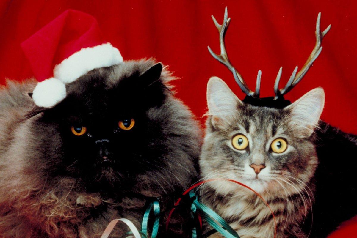 Другу девушке, картинки смешные новогодние коты