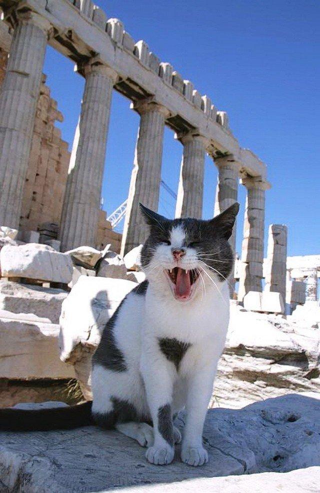 обследовать греческие кошки картинки продолжение предыдущего