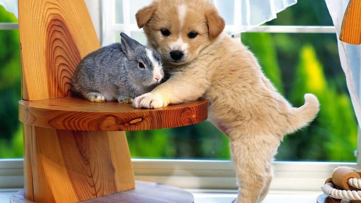 Фото, животные фото красивые и милые