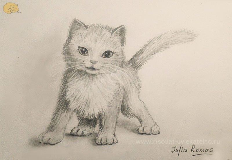 своего опыта картинки как нарисовать простым карандашом котят антикафе