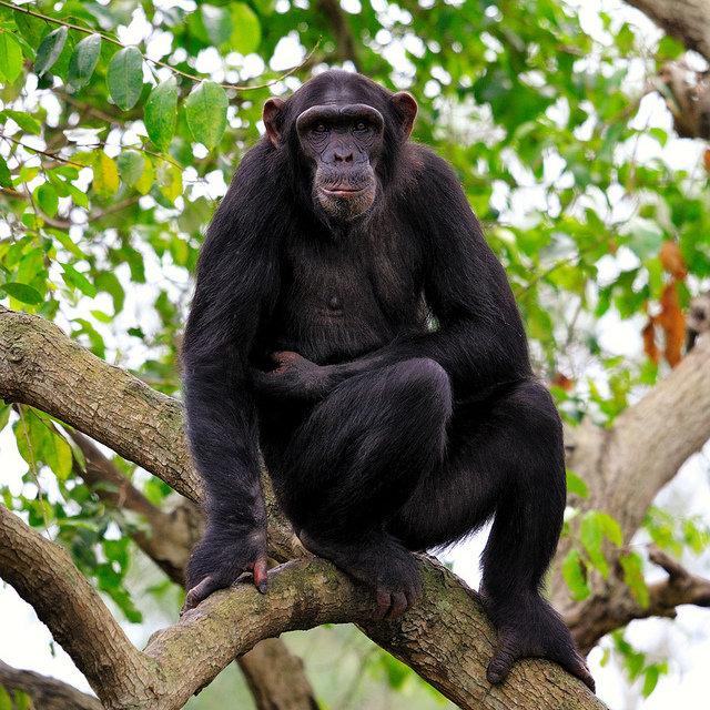 Картинки обезьян с телефоном такое