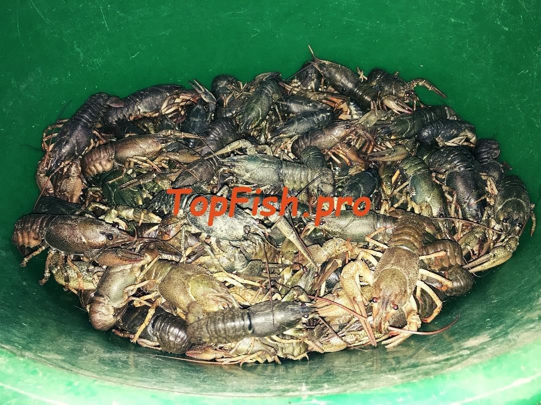 активатор клева fish hungry состав