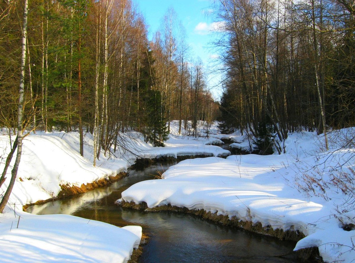 Весна идет #весна #красота #лес #март #пейзаж #природа #река #речка