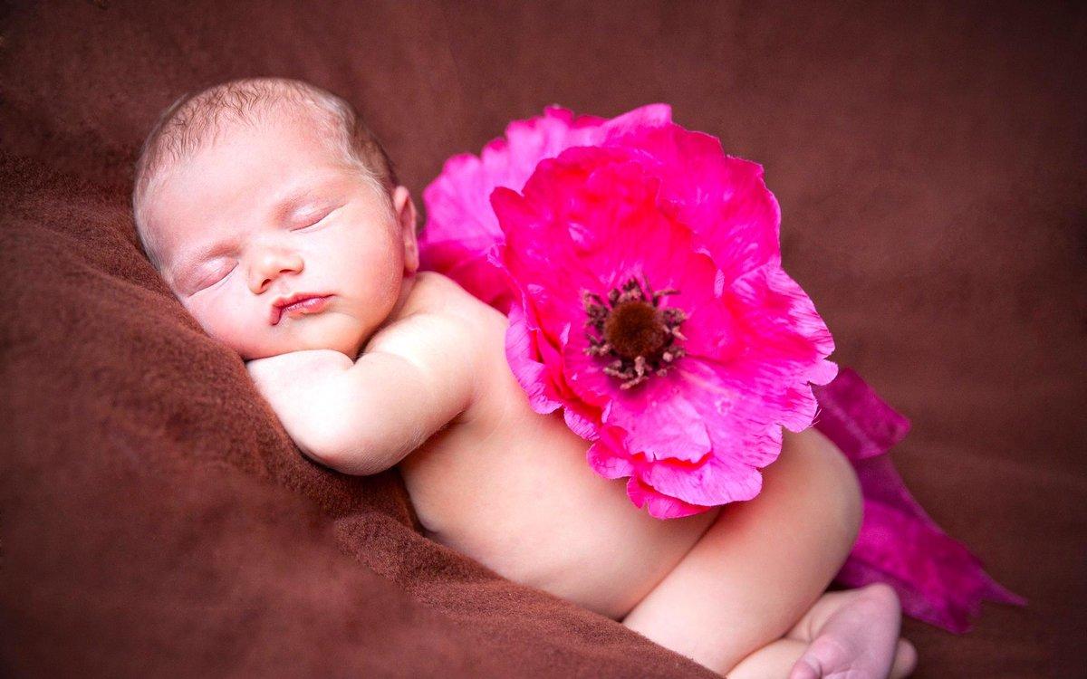 Картинка младенец в цветке