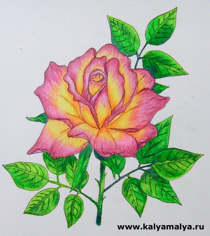 Картинки рисунки цветка