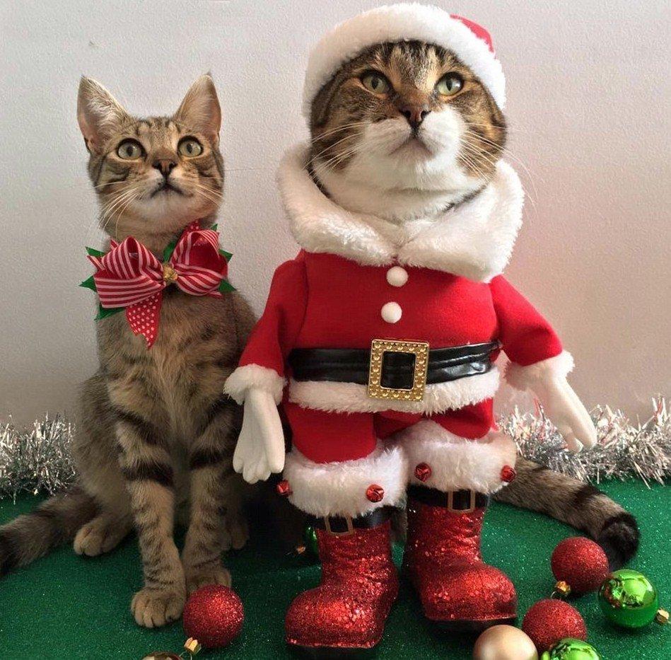 Смешные картинка про новый год