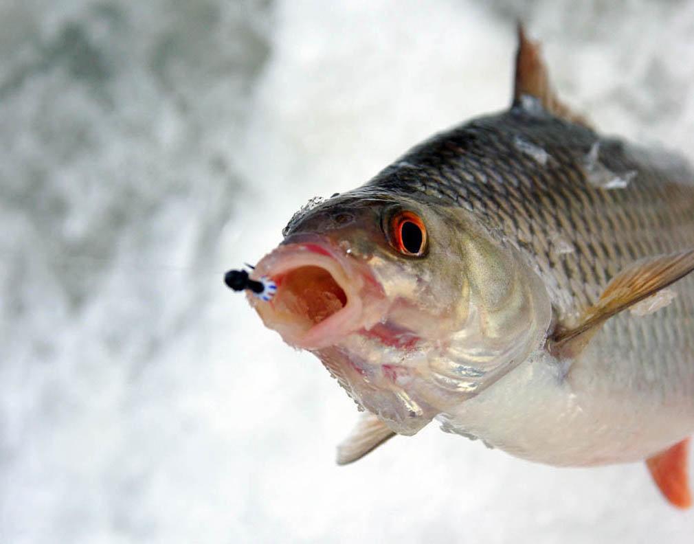 Почему не клюет рыба зимой