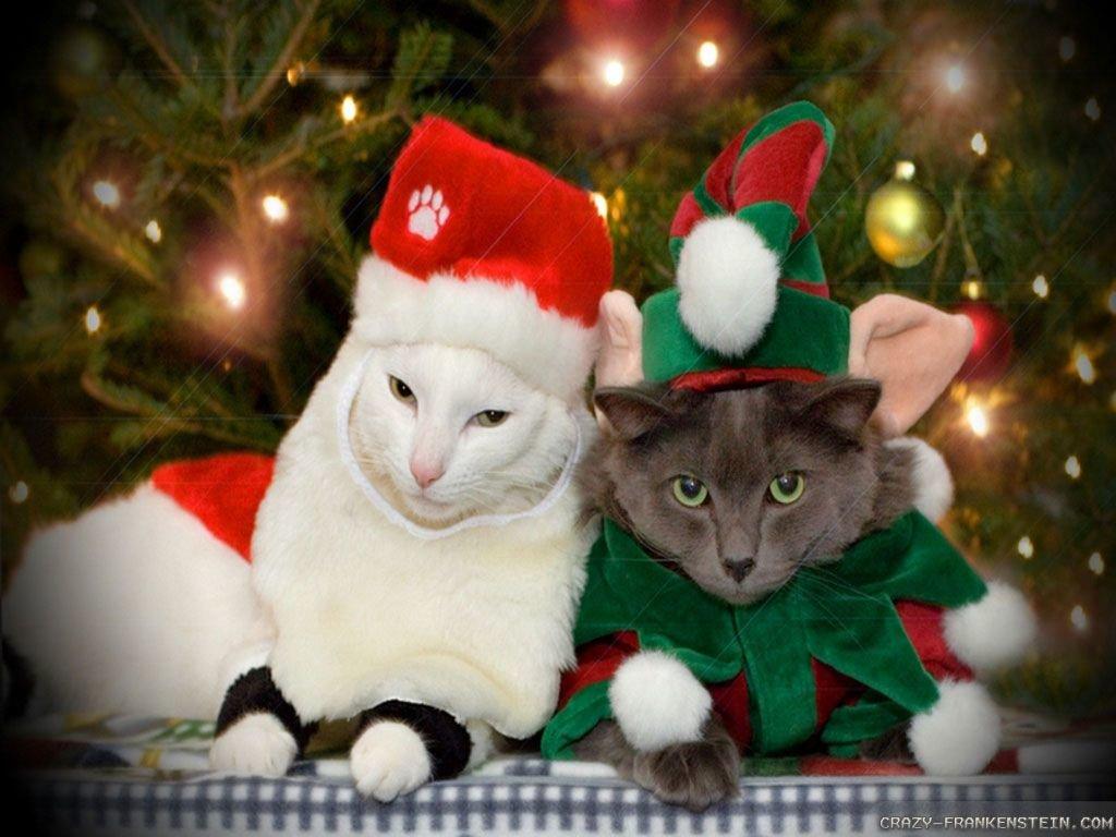 Смешные картинки с котами новый год