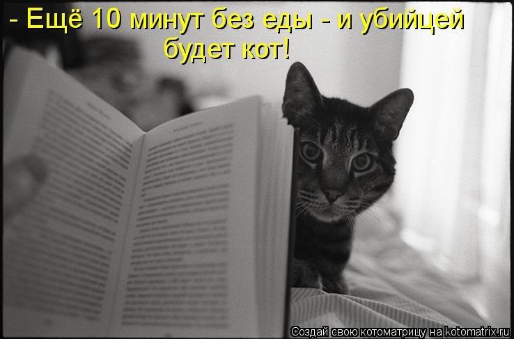 Смешные картинки цитаты о кошках