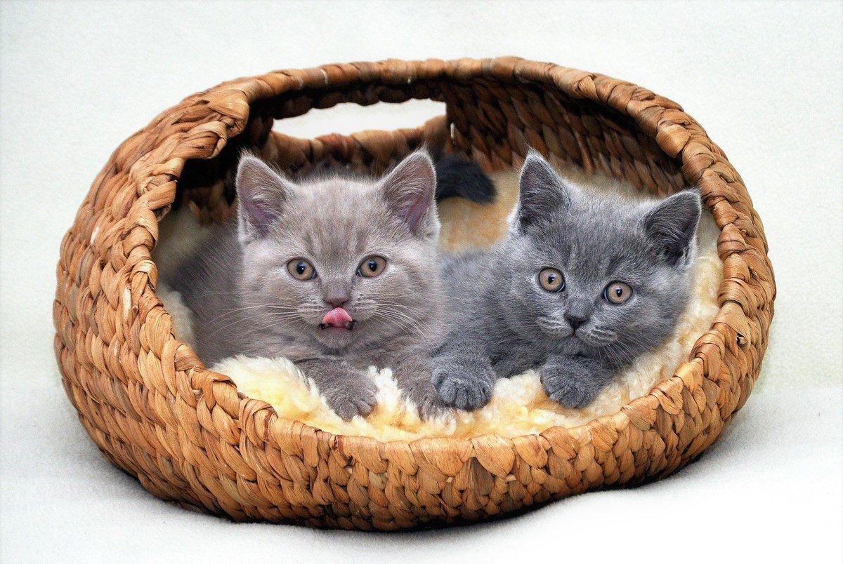 Умелец, картинки два котенка в корзинке