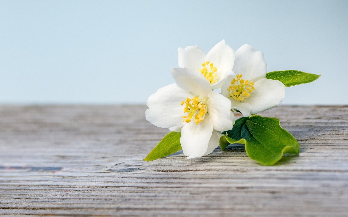 Капуста, цветок жасмина открытки