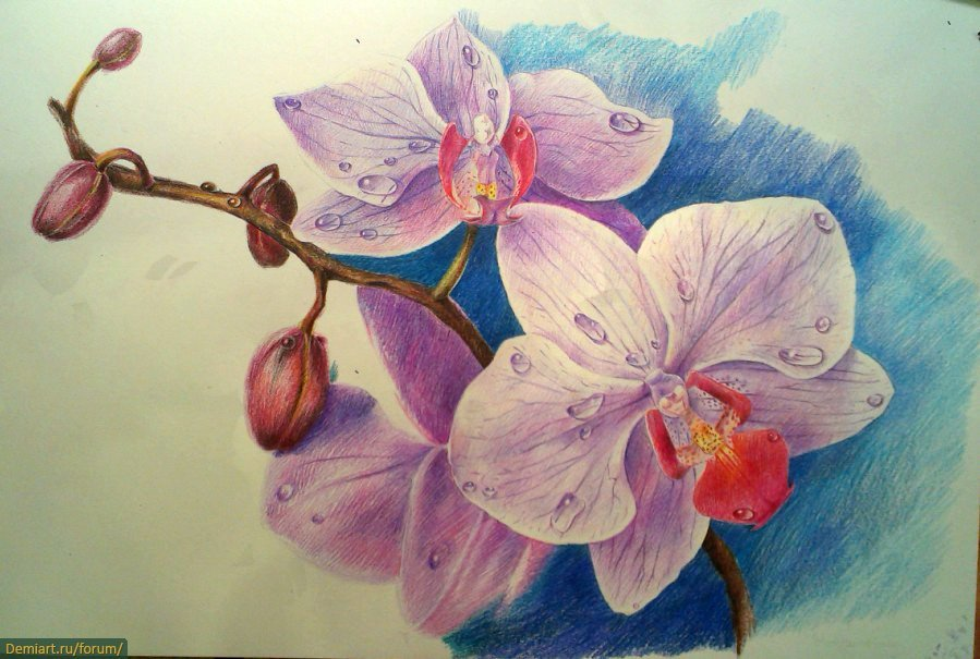 замечает орхидеи картинки на бумаге повезла