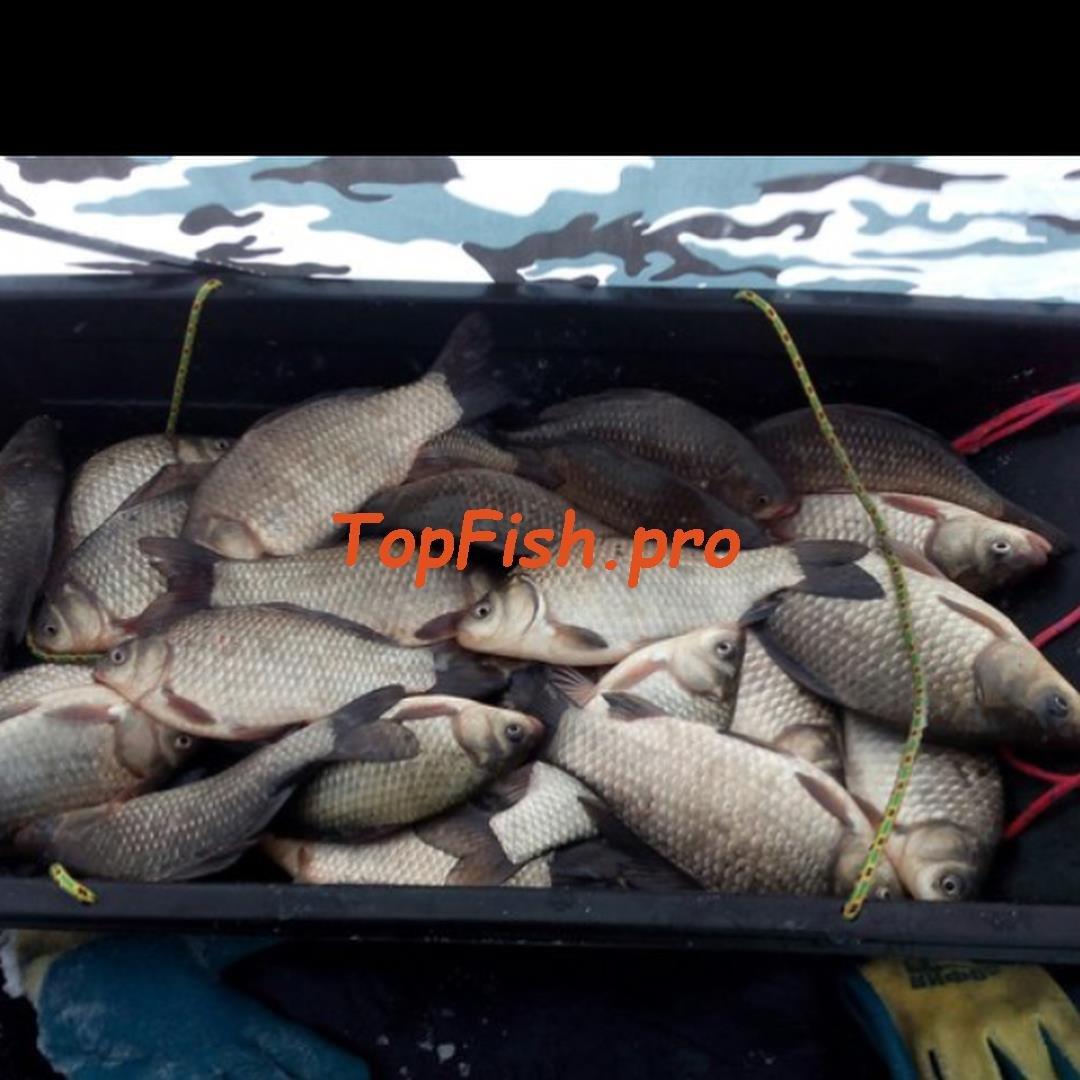 Клев рыбы в лангепасе