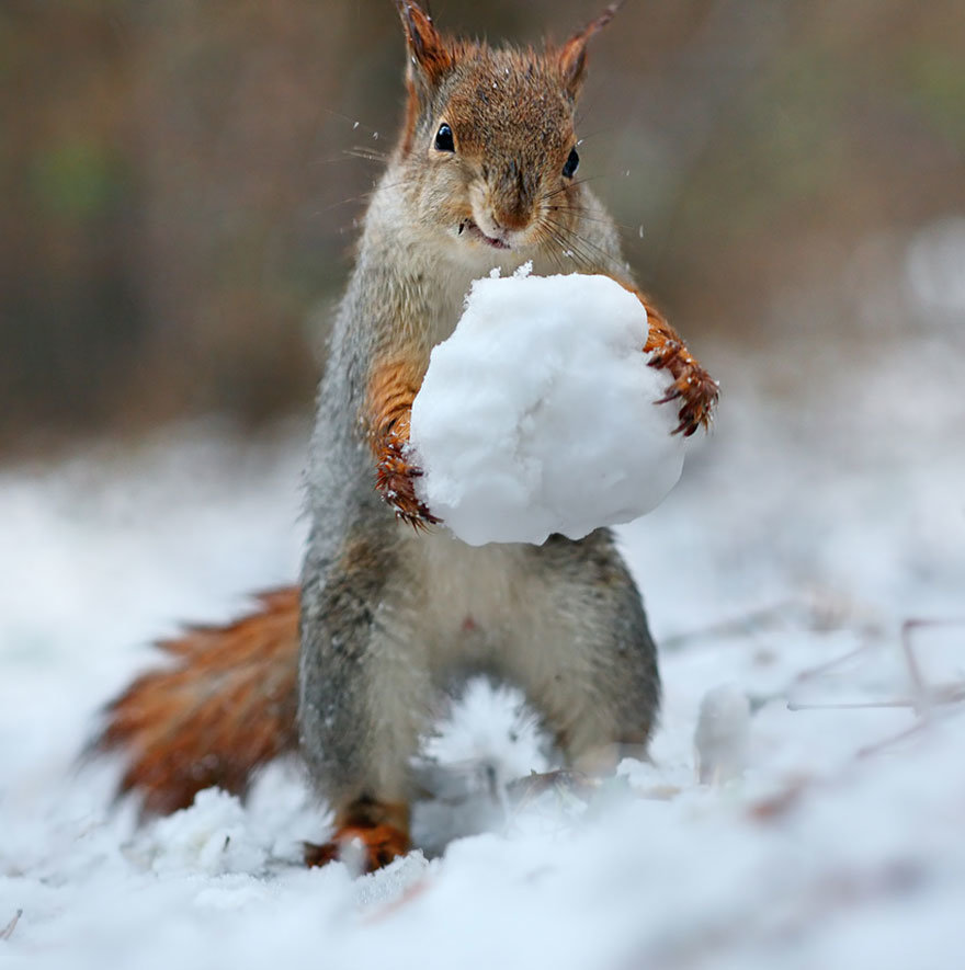 Смешные картинки про зима, днем