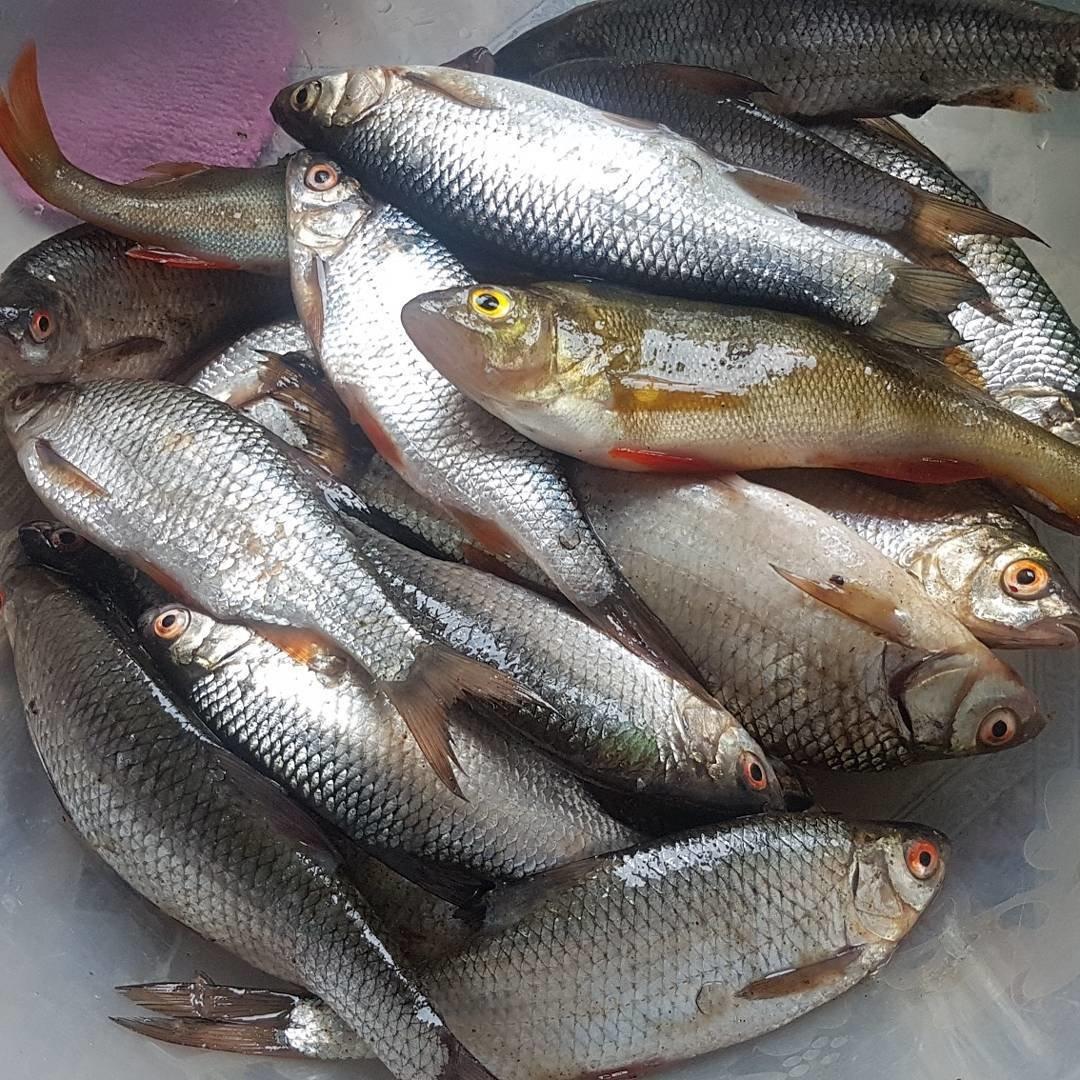 Донские рыбы фото
