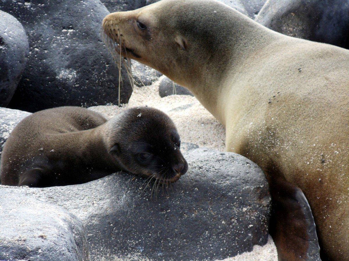 карьера все о тюленях и их картинки удаленности солнца